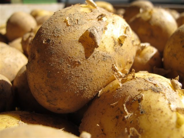 Frühkartoffel AgroFresh